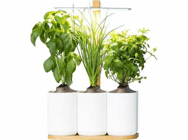 LED Indoor Garten Prämien und Zuwendungen als Mitarbeitergeschenk und Kundengeschenk